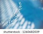 beautiful blue blurred winter... | Shutterstock . vector #1260682039