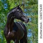 Stock photo portrait of black stallion of russian riding breed 126071630