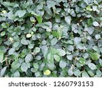 background leaves in the... | Shutterstock . vector #1260793153