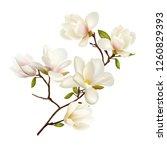 magnolia. beautiful. gentle.... | Shutterstock .eps vector #1260829393