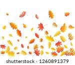 oak  maple  wild ash rowan... | Shutterstock .eps vector #1260891379