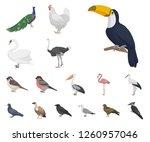 Types Of Birds Cartoon Icons In ...