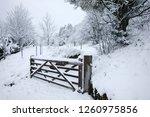 A Gate And Access Onto Juniper...