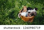 top view of a wooden basket... | Shutterstock . vector #1260980719