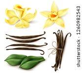 vanilla plant realistic set... | Shutterstock .eps vector #1260982543