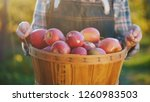 farmer's hands hold a large... | Shutterstock . vector #1260983503
