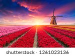 the road leading to the dutch... | Shutterstock . vector #1261023136
