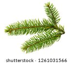 fir branch isolated on white... | Shutterstock . vector #1261031566