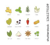 set of culinary spices and herb ... | Shutterstock .eps vector #1261275109