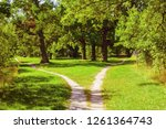 splitting the footpath in the... | Shutterstock . vector #1261364743