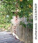 freaky flower nature   Shutterstock . vector #1261369609