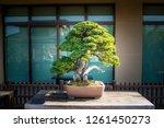 Japanese Bonsai Tree In Omiya...