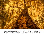 tree of life | Shutterstock . vector #1261504459