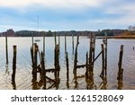 Old Wood Pilings  And The...