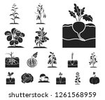 plant  vegetable black icons in ...   Shutterstock .eps vector #1261568959