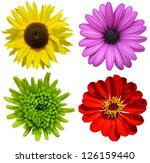 Stock photo collage with colorful flowers isolated 126159440
