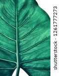 tropical leaf texture  close up ... | Shutterstock . vector #1261777273
