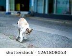 A Photo Of A Little Cat Dig An...