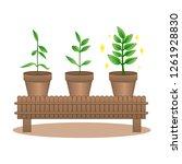 tree pot growing step concept ... | Shutterstock .eps vector #1261928830