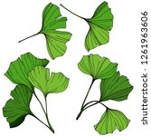 vector isolated ginkgo... | Shutterstock .eps vector #1261963606