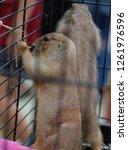 prairie dog in a steel cage. | Shutterstock . vector #1261976596