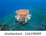 A Tube Anemone Lives On A Sand...