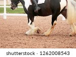 Small photo of The legs and feathered,hooves of a cobby piebald horse being ridden in a sandy arena during a dressage competition.