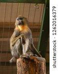 monkey looking left | Shutterstock . vector #1262016379