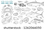 seafood vector illustrations.... | Shutterstock .eps vector #1262066050