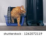 Ginger Cat In A Travel Crate...