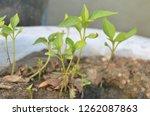 nature photography in garden | Shutterstock . vector #1262087863