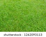 green grass texture background. | Shutterstock . vector #1262093113