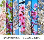 spring flowers collage | Shutterstock . vector #1262125393
