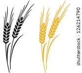 Ears Of Wheat  Barley Or Rye...