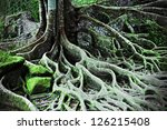 roots of the magic tree   Shutterstock . vector #126215408