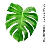 green leaves pattern leaf... | Shutterstock . vector #1262179120