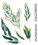 set of watercolor eucalyptus... | Shutterstock . vector #1262258053