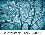 scenic snowy view of bare trees ... | Shutterstock . vector #1262263843