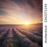 meadow of lavender at sunset.... | Shutterstock . vector #1262271193