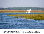 a great egret  ardea alba ...   Shutterstock . vector #1262276839