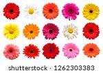 collection head flowers... | Shutterstock . vector #1262303383