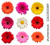 Collection Head Flowers Chamomile Gerbera - Fine Art prints