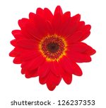Red Gerbera Flower Isolated On...