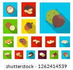 different kinds of nuts flat... | Shutterstock .eps vector #1262414539