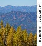 beautiful  colorful  autumn ... | Shutterstock . vector #1262425759