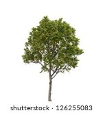 Tree Isolated White Background - Fine Art prints