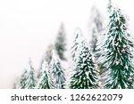 christmas pine tree in winter... | Shutterstock . vector #1262622079