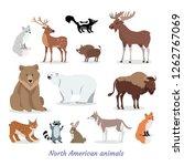 north american animals cartoon... | Shutterstock . vector #1262767069
