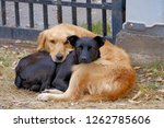Dog Love, beautiful authentic image of a black and a golden dog cuddling each other, Pirque, Santiago De Chile, Chile, South America