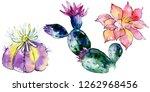 green cactus. floral botanical... | Shutterstock . vector #1262968456